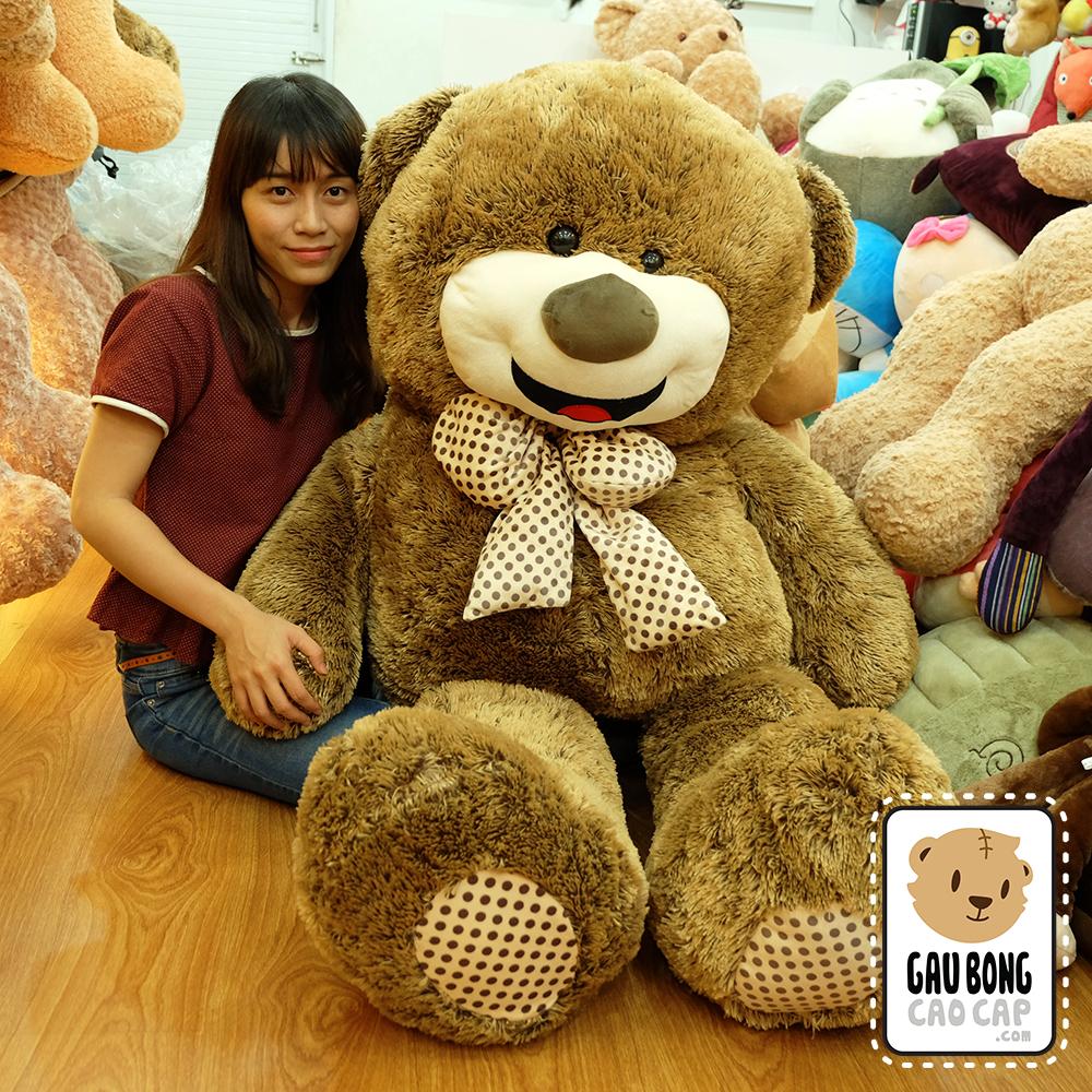 Gấu Teddy Lông Nhím Mặt Cười