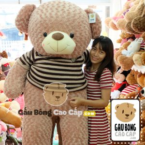 Gấu Teddy áo len Choco BigSize 1m6