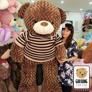 Gấu Teddy áo len Choco BigSize 1m7