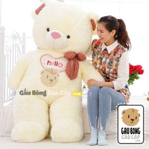 Gấu Bông Teddy Hello BigSize