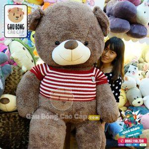 Gấu Teddy Áo Len Lông Sợi
