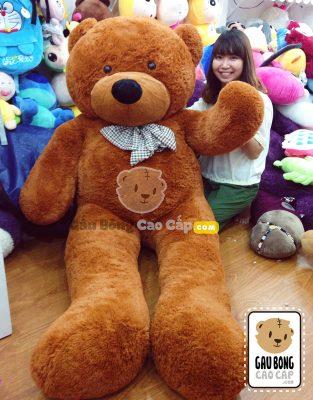 Gấu Teddy