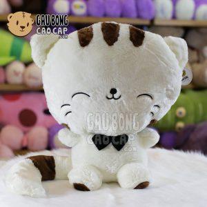 Mèo Bông Mặt Lớn