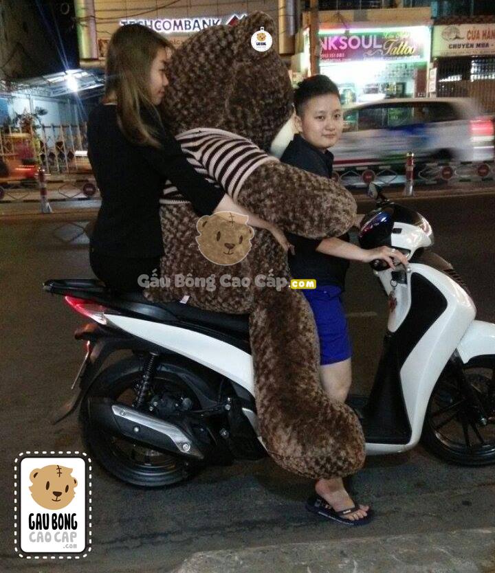 Gấu Teddy áo len choco 2m