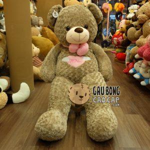 Gấu Teddy Angel lông xoắn