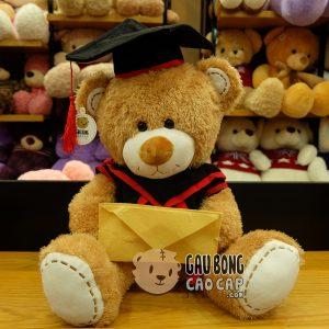 Gấu Teddy Tốt Nghiệp - Lông Sợi