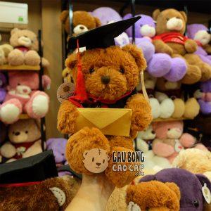Gấu Teddy Tốt Nghiệp - Lông Tơ Mịn