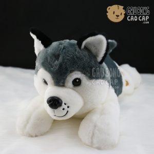 Chó Bông Husky - Lông tơ mịn - Không áo