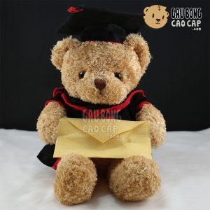 Teddy tốt nghiệp lông xù cầm bì thư
