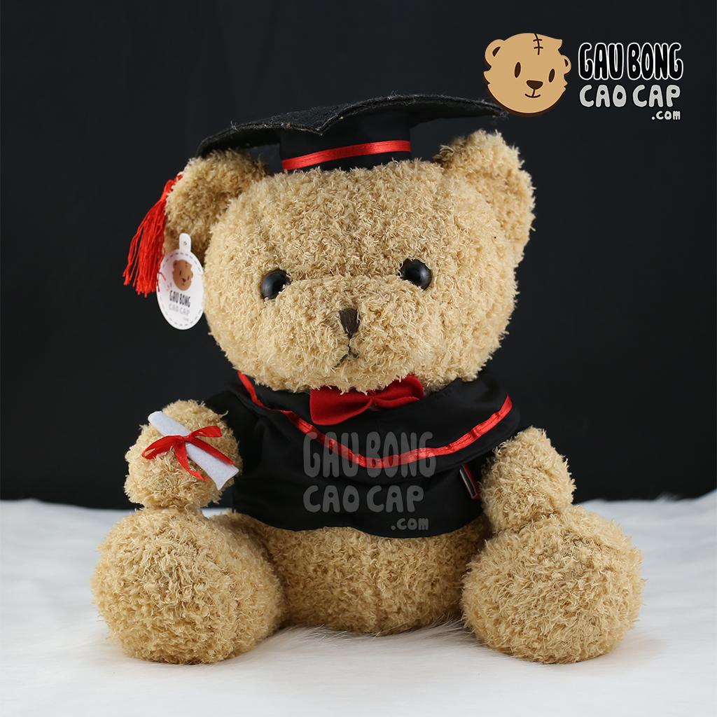 Gấu teddy tốt nghiệp lông xù