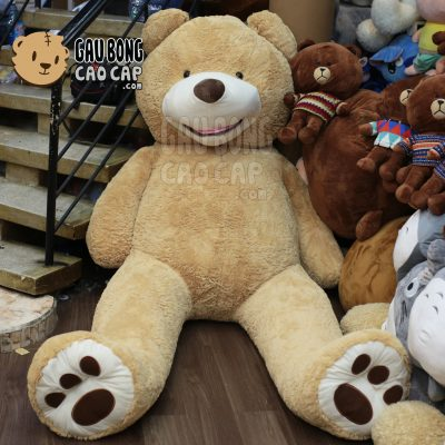 Gấu Teddy Costco