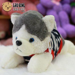 Chó bông Husky mặc áo thun