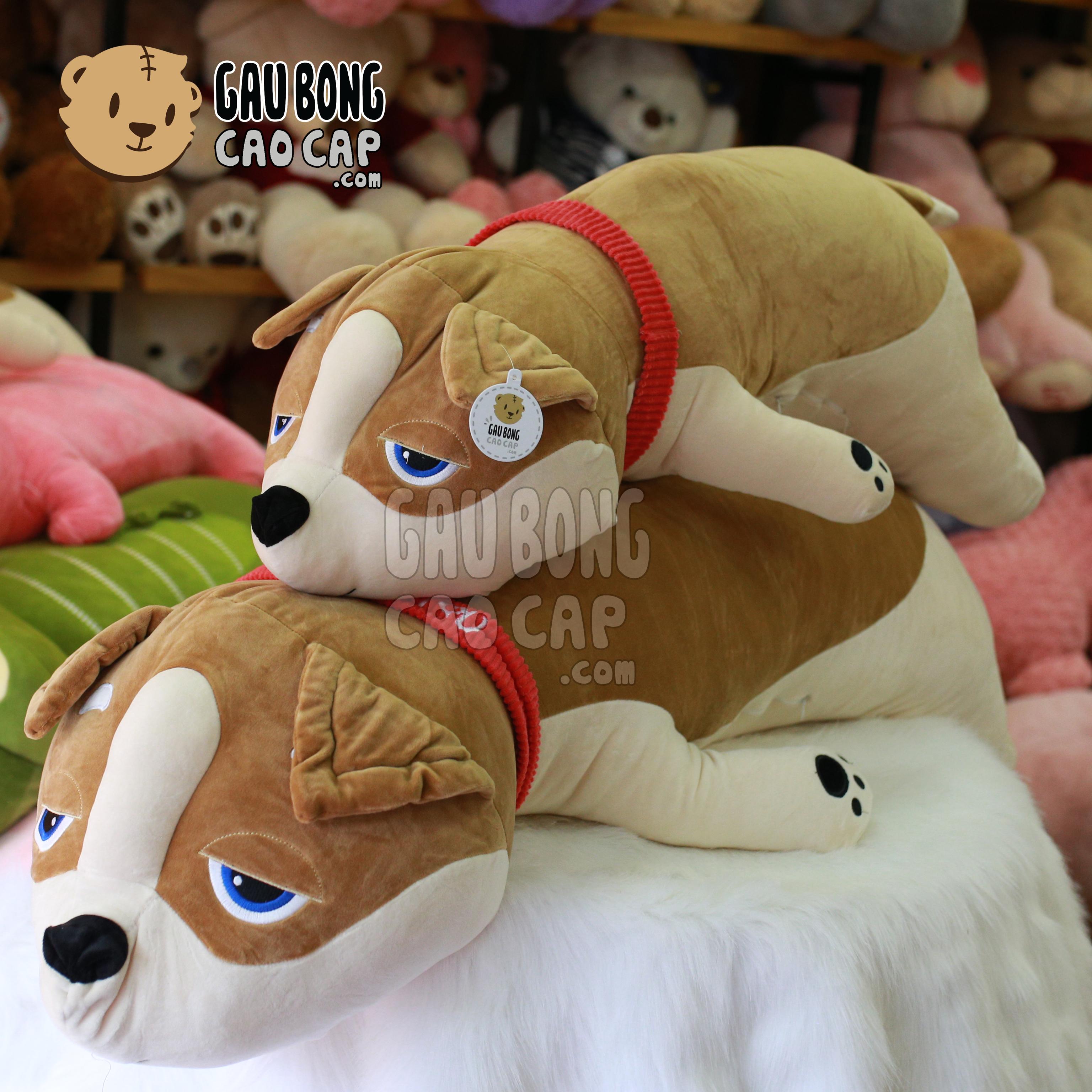 Chó Bông SHIBA nằm choàng khăn