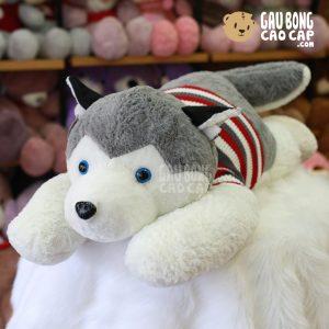 Chó Bông Husky mặc áo len