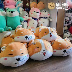 Chó Bông Shiba mặt Kute