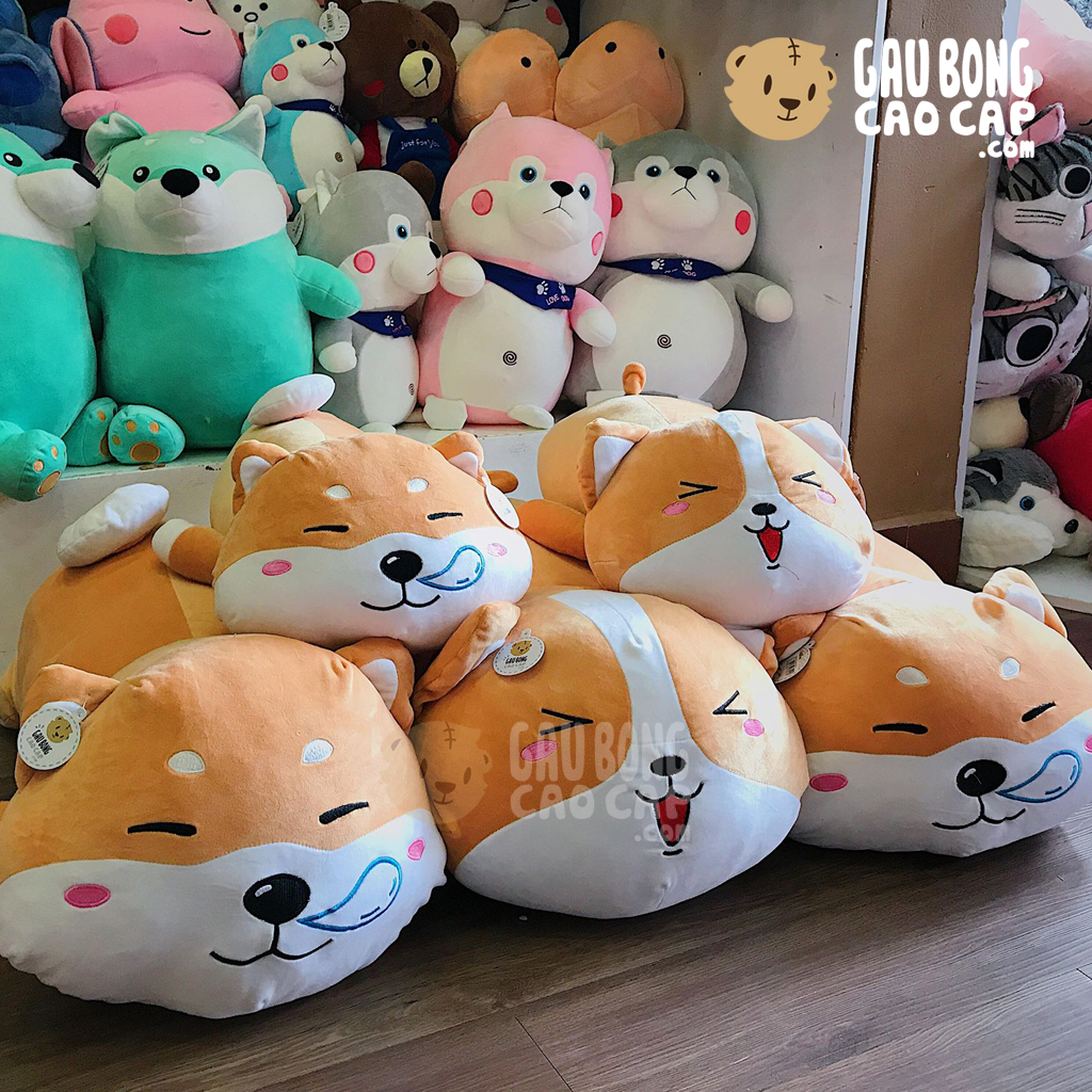 Chó bông Shiba kute