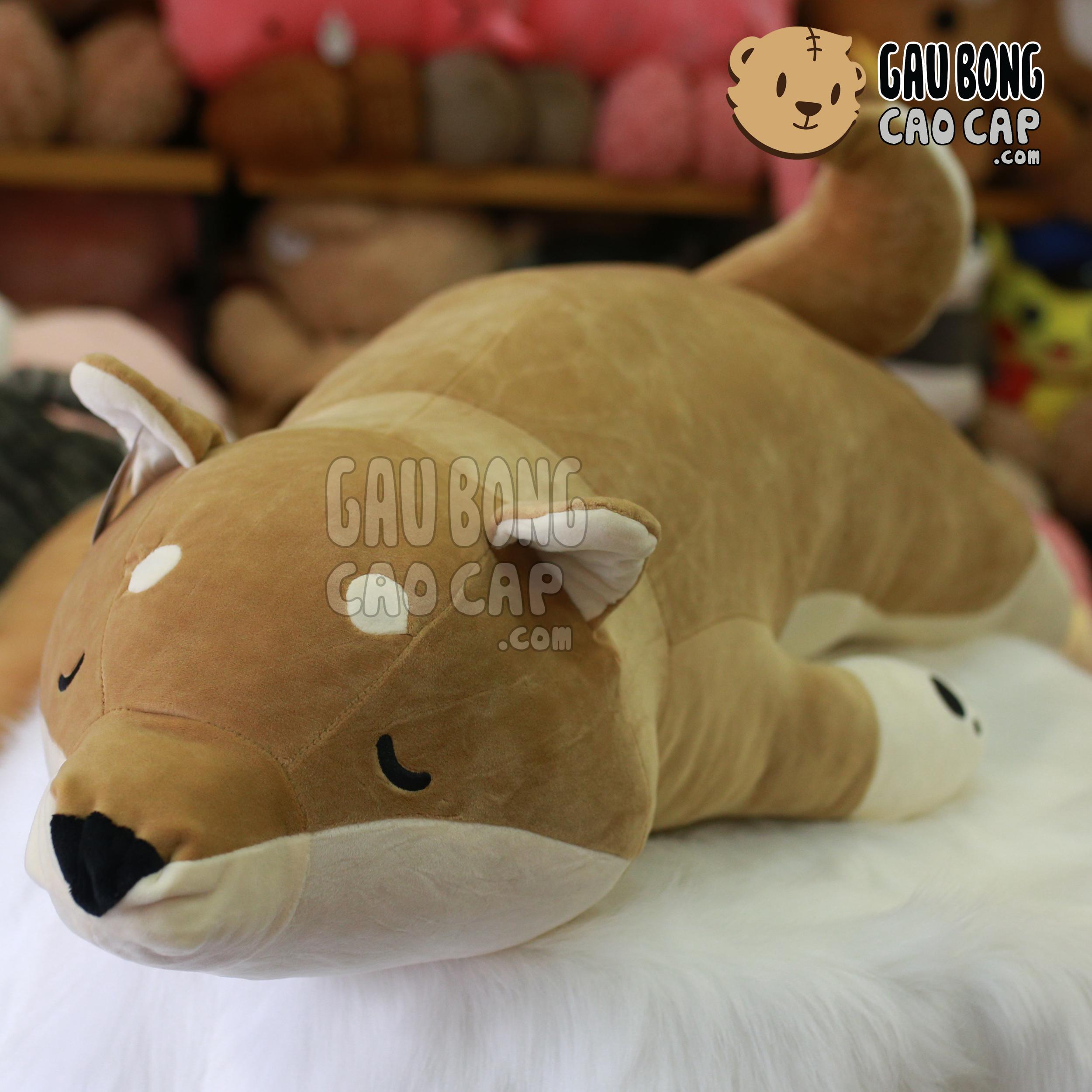 Chó Bông Shiba nằm