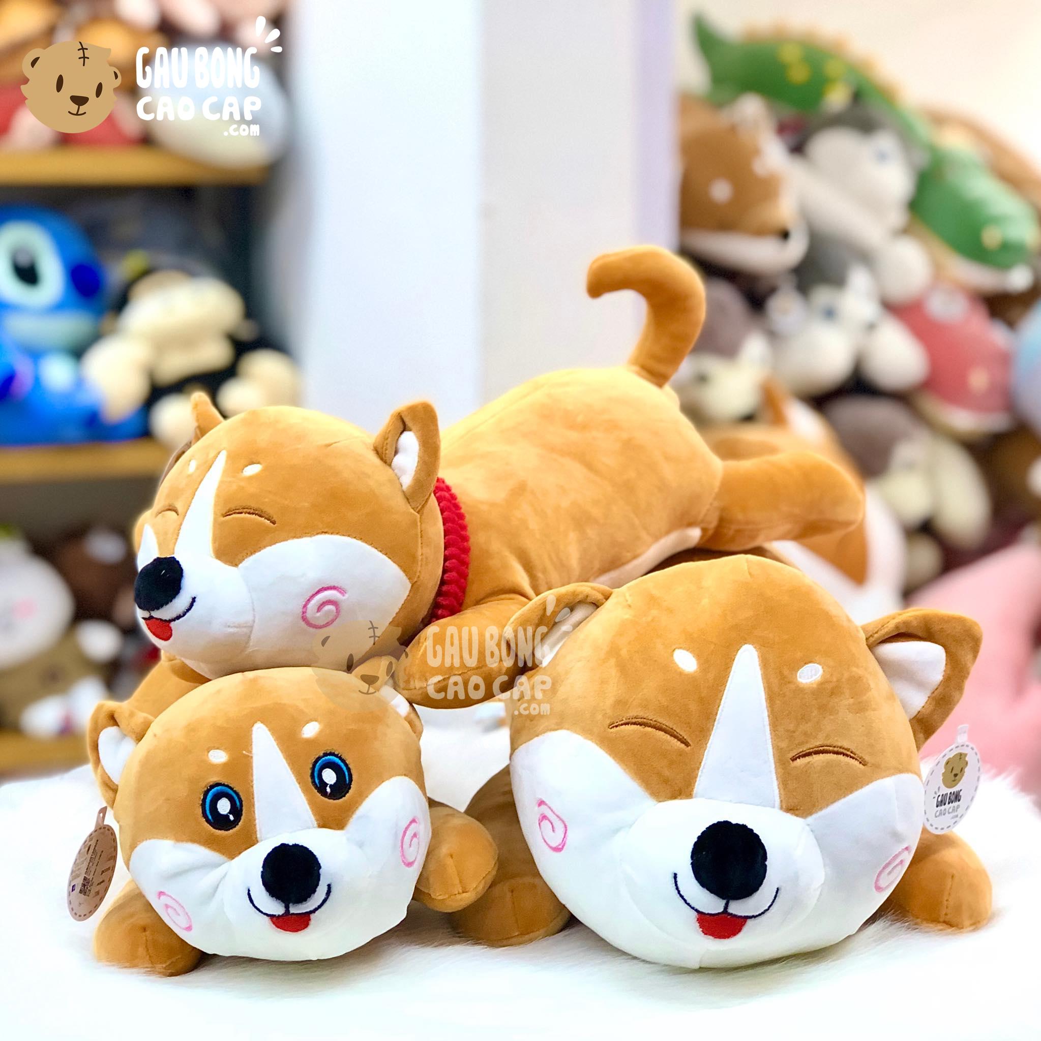 Chó bông Shiba nằm má Hồng xoắn ốc