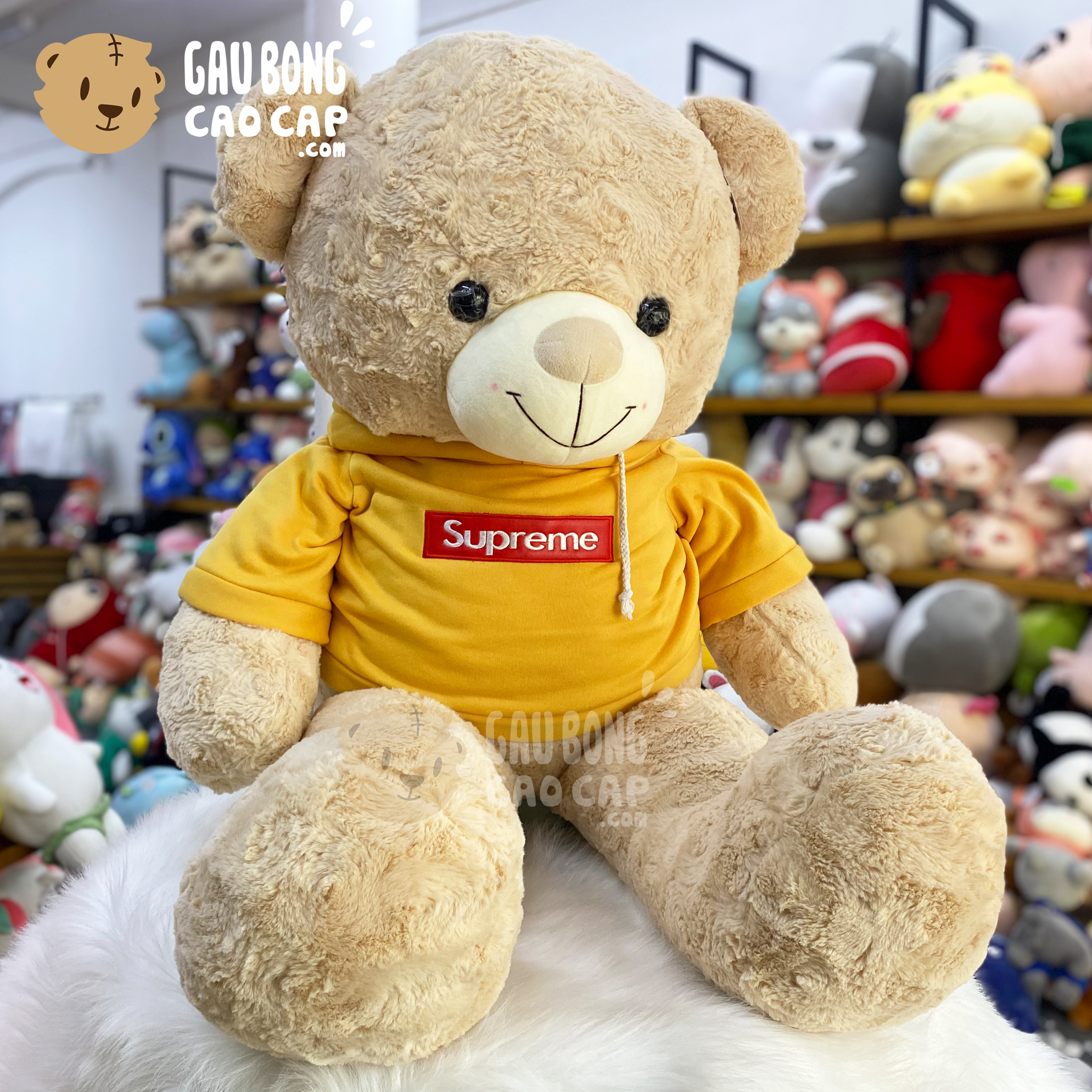 Gấu Teddy lông xoắn mặc áo Hoodie