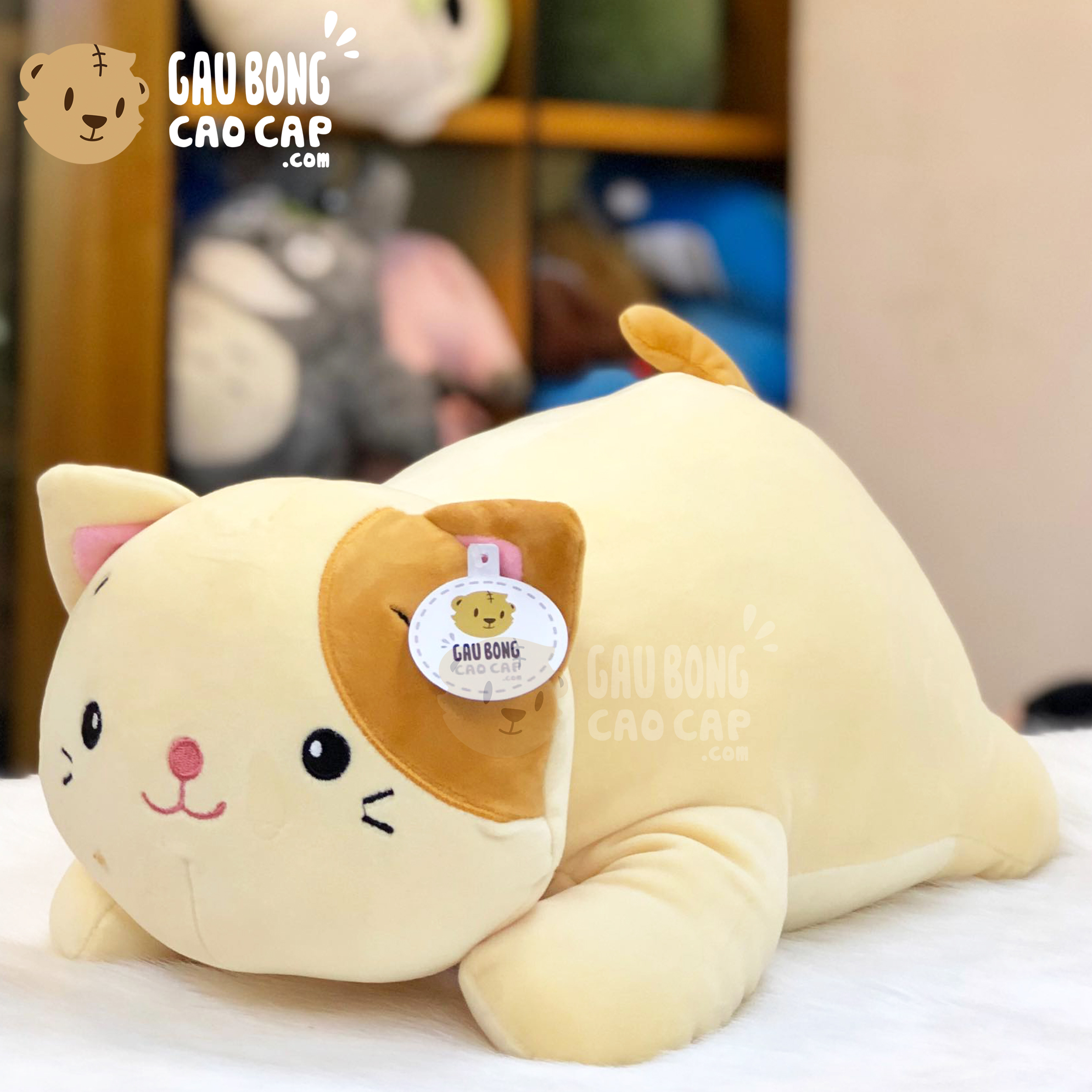 Mèo Bông nằm đuôi vàng lông mịn