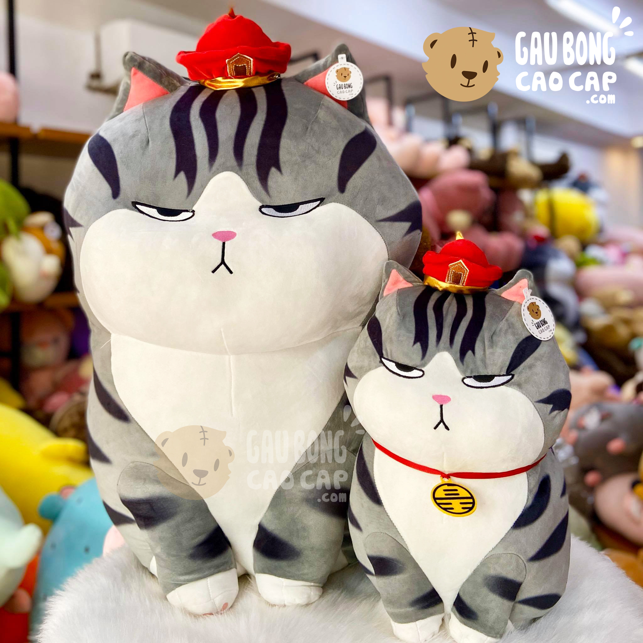 Mèo Bông Hoàng Thượng ngồi chụm chân
