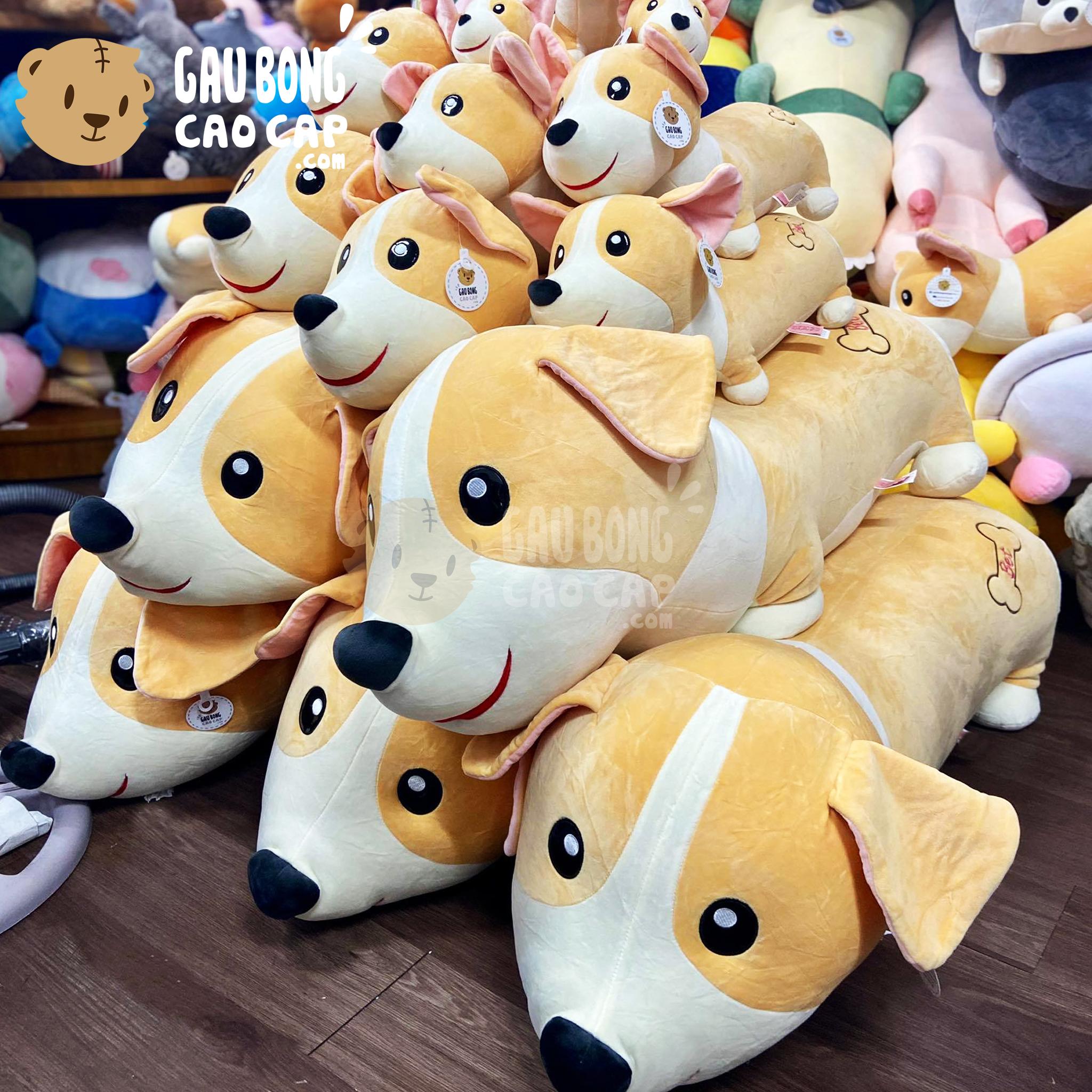 Chó Bông vàng nằm mông xương