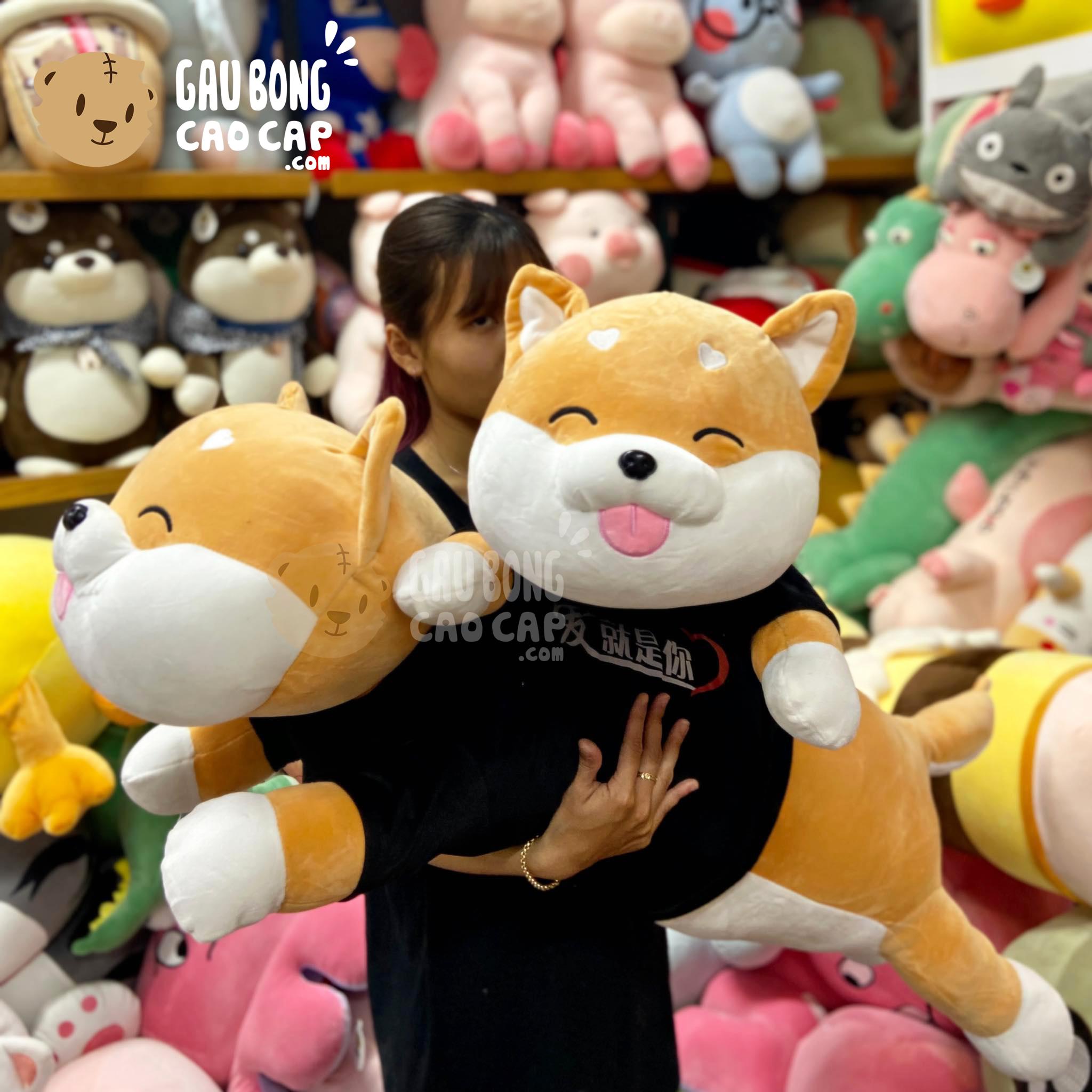 Chó Bông Shiba nằm Lè Lưỡi mặc Áo Thun Đen