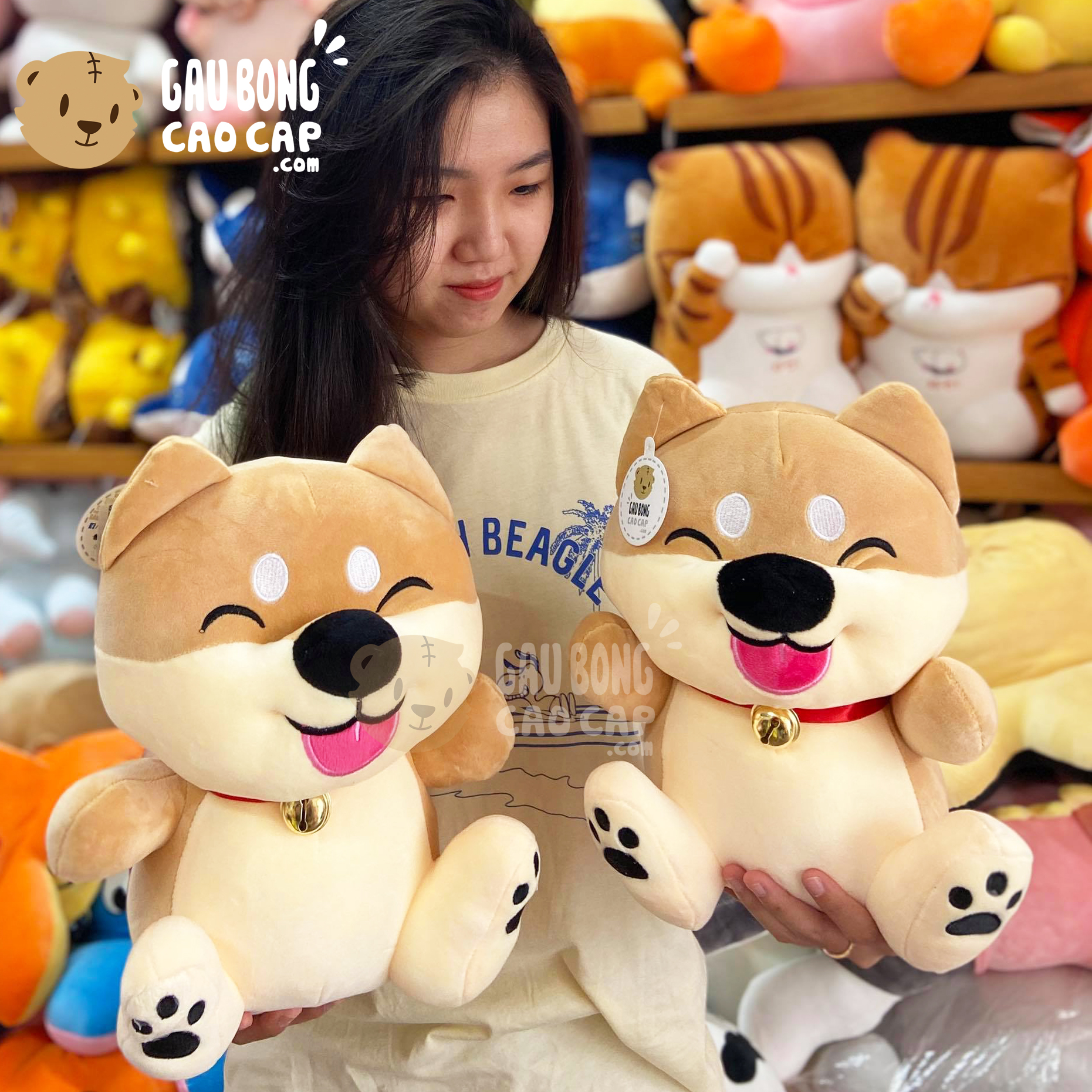 Chó Bông Shiba Baby Ngồi cười híp mắt Lè Lưỡi đeo chuông