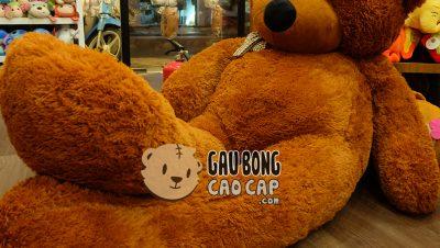 Gấu bông khổng lồ – Gấu bông to bằng người
